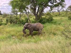 8 Days Kruger National Park Safari and Cape Town Tour in South Africa