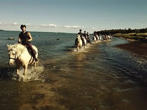 8 Days Enthralling Horse Riding Holiday in Muhu, Estonia