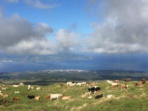 8-Daagse Meditatie en Natuurreis met Yoga op Pico op de Azoren