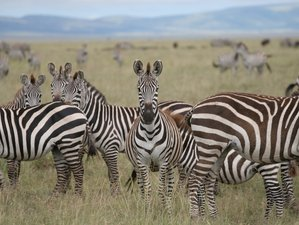 4 Days Budget Tanzania Safari in Tarangire, Serengeti, and Ngorongoro Crater