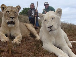 14 Days Sightseeing and Tour Safari in Cape Town, South Africa