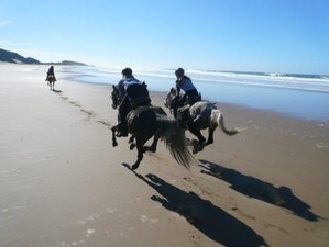 3 Days Kei River Beach Horse Riding in South Africa