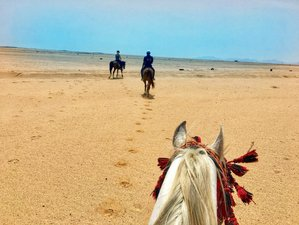 8 Day Palms, Pyramids, and Pharaohs Horse Riding Holiday in Cairo, Luxor, and the Red Sea in Egypt
