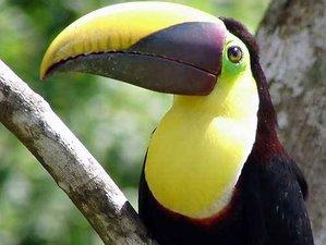 3 Day Enchanting Wildlife Adventure in Uvita, Puntarenas