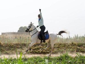 8 Day Adventurous Horse Riding Holiday in Luxor and Makadi Bay, Egypt