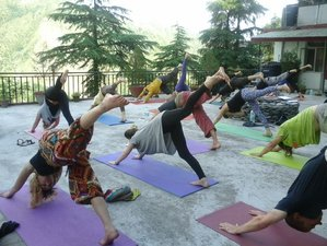 7-Daagse Beginners Yoga Retraite in Dharamsala, India