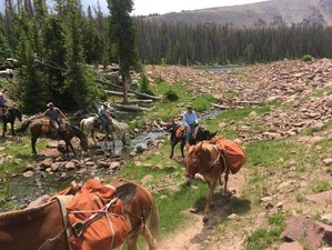 4 Day Brown Duck Horseback Pack Trip in The High Uinta Mountains, Utah