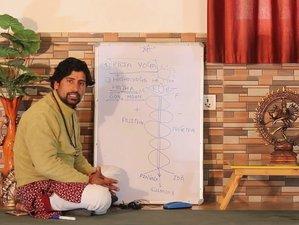 15 Day 15-Hour Online Yoga Philosophy Masterclass Yoga Teacher Training Series