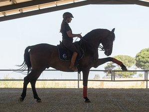 7 Day Classical Dressage and High School Training in Seville