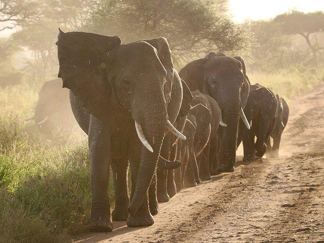 12 Days Family Safari in Tanzania