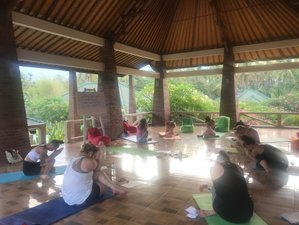 7 Days 60-Hour Yin Yoga with 5 Elements, Meridian & Fascia Therapy Teacher Training in Bali