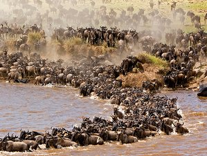 4 Days Safari in Tarangire, Serengeti, and Ngorongoro Crater, Tanzania
