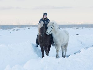 4 Day Winter Horse Riding Holiday with the Locals in Reykjavik