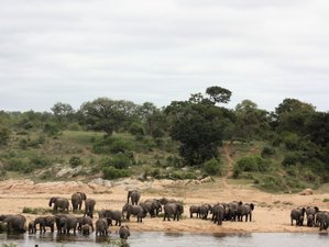 4 Days Impressive Kruger Park Safari in South Africa
