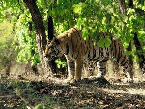 3 Day Ranthambore National Park Safari
