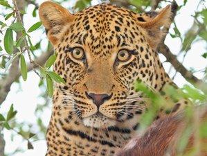 5 días en un fantástico safari en Ol Pejeta, lago Nakuru, Masái Mara en Kenia