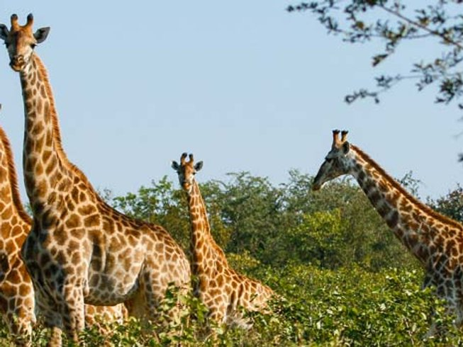 6 Days Affordable Safari in South Africa