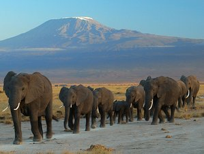 7 Days Amazing Wildlife Safaris in Kenya and Tanzania