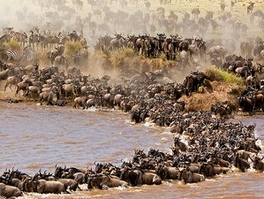 6 Days Migration Safari in Northern Tanzania