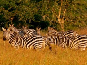 4 Days Luxury Safari in Uganda by Air