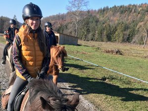 2 Days Exciting Horse Riding Holiday in Transylvania, Romania