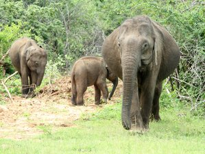 3 Day All Inclusive Wildlife Tour in Belihuloya and Yala, Sri Lanka