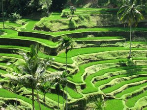 5 Day Beginner Yoga Meditation with Holiday Tour in Tabanan, Bali