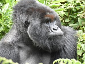 4 Days Spectacular Gorilla Safari in Uganda
