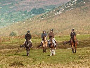 4 Days Luxury Saddles, Spa, and Castle Stay Horse Riding Holiday in Dartmoor, UK