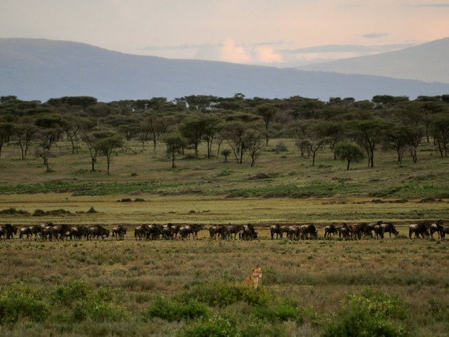 7 Days Safari in Tanzania
