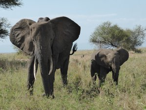 15 Days Mindfulness Nature Safari in Tanzania, Africa