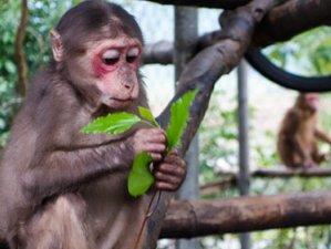 3 Days Walking Wildlife Tour in Phong Nha Ke Bang National Park, Vietnam