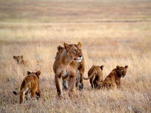 6 Days Best Camping Safari in Tanzania