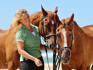 8 Day Discovery Beginner Horseback Riding Course in Mimizan, Landes