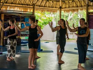 7 Day Reiki Level 1 and 2 Training with Meditation and Qi Gong in Bali