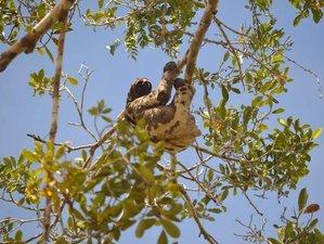 6 Day Wildlife Tour in Pacaya-Samiria National Reserve, Peruvian Amazon Rainforest