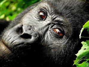 19 Day Luxury Sanctuary Retreats Multi-Country Safari Tours in Uganda, Tanzania, and Zambia