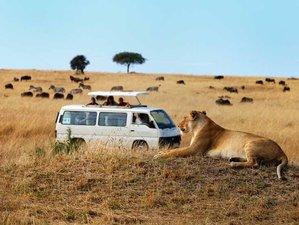 4 Days Budget Safari in Masai Mara and Lake Nakuru, Kenya