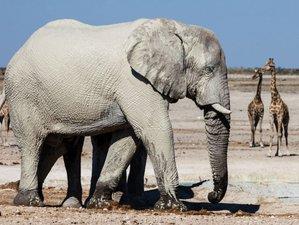 3 Days Camping Safari In Sossusvlei Namibia Bookallsafariscom