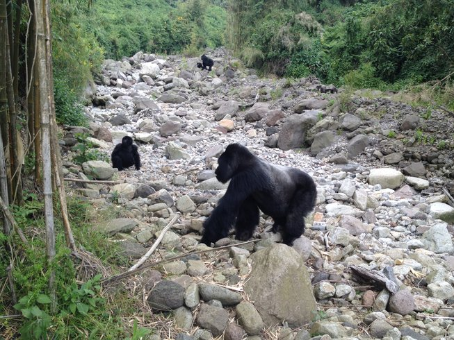 5 Days Cultural Experience and Gorilla Safari in Rwanda