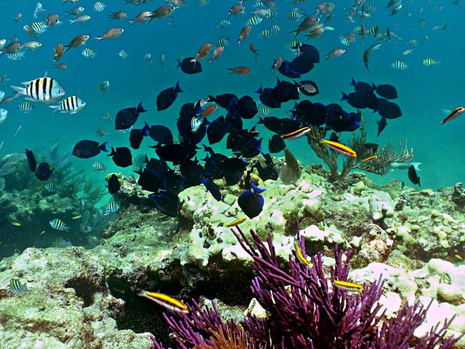 6 Days Yoga and Scuba Certification in Florida Keys, USA