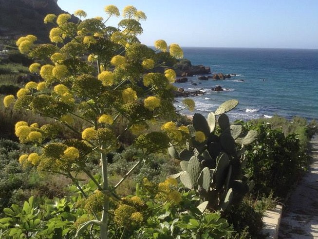 8 Days Well-Being Detox and Yoga Retreat in Malta