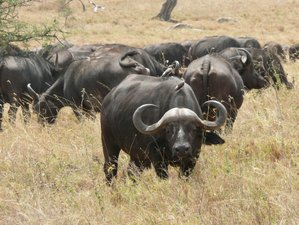5 Days Tsavo, Amboseli, Taita, and Ngutuni Conservancy Private Safari in Kenya