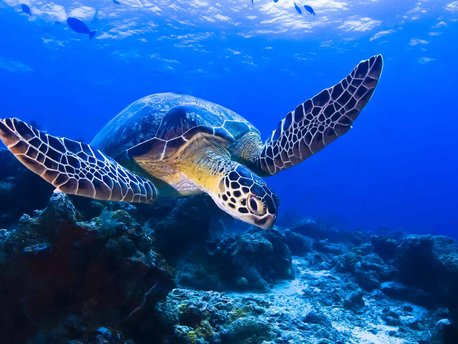 Turtle Islands National Park