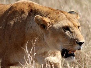 4 Days Serengeti and Ngorongoro Budget Camping Safari in Tanzania