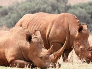 4 Days Guided Safari in Balule Nature Reserve, South Africa