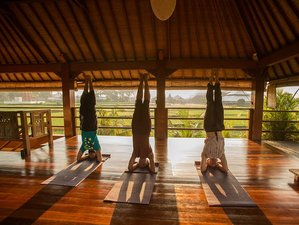 8 Days Embodying Yoga Retreat in Bali, Indonesia