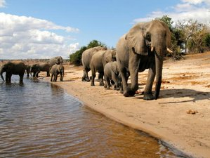 4 Day Victoria Falls and Chobe National Park Safari in Zimbabwe and Botswana