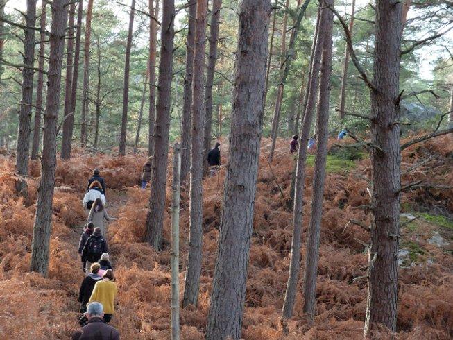 2 jours en stage de yoga et randonnée en forêt de Fontainebleau, France