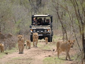 22 Days Big Five Safari South Africa